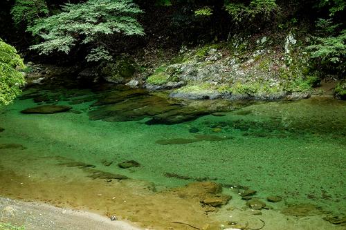 針畑川は、来春まで禁漁・・・天然マイタケ_d0005250_19393817.jpg