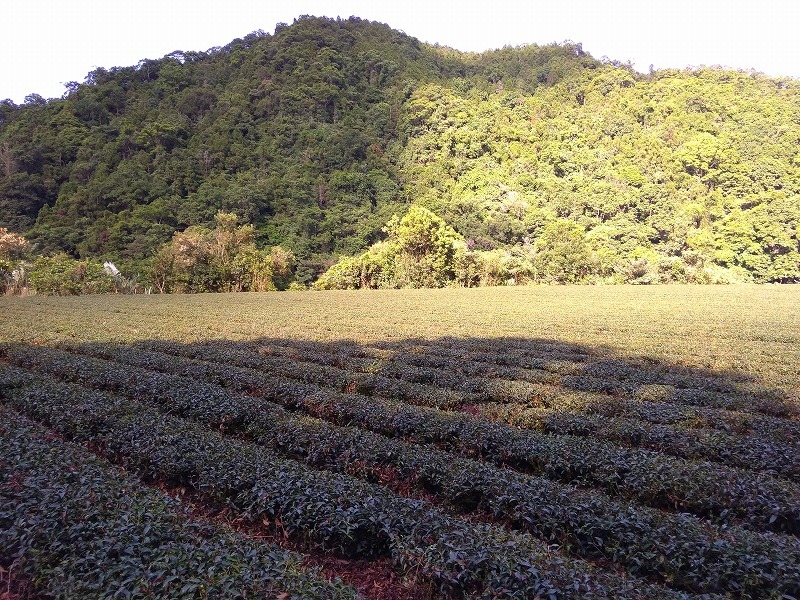 茶々っと台湾③_b0141264_07552848.jpg