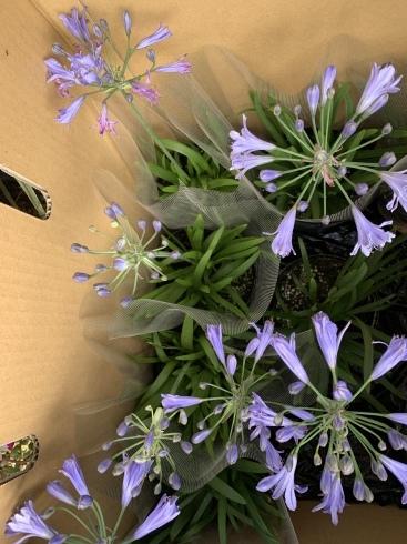 アナーセン 秋色Gardenフェア  延長して10月20日まで‼️_b0137969_06401165.jpeg