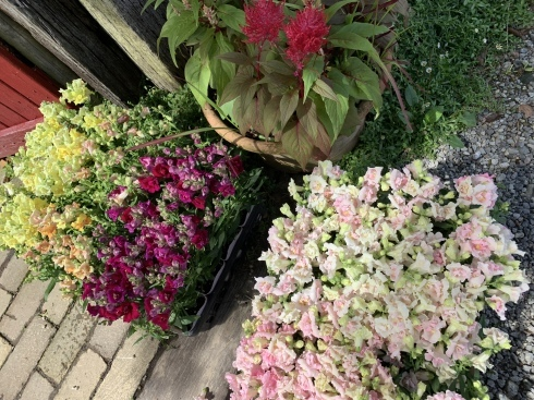 アナーセン 秋色Gardenフェア  延長して10月20日まで‼️_b0137969_06523213.jpeg