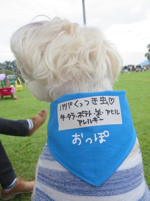 朝霧フィールドドッグガーデン_d0264176_19231945.jpg