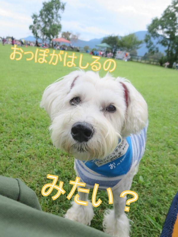 朝霧フィールドドッグガーデン_d0264176_20302072.jpg