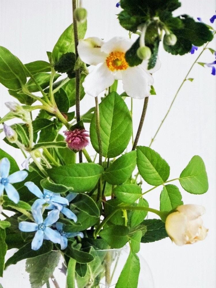 レフア蜂蜜と白いイングリッシュローズ_a0147281_16583735.jpg