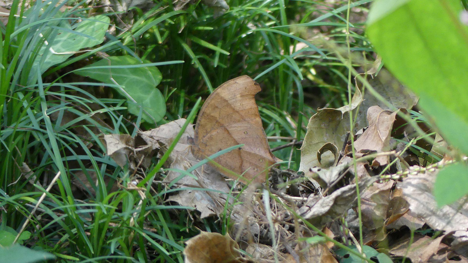 ニンニン! 木の葉隠れ!_a0185081_20225923.jpg