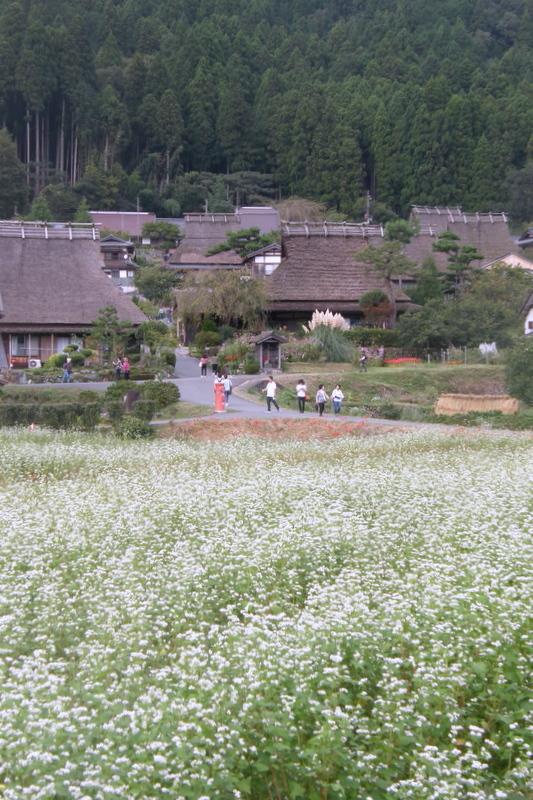 そば畑_c0057390_23002399.jpg
