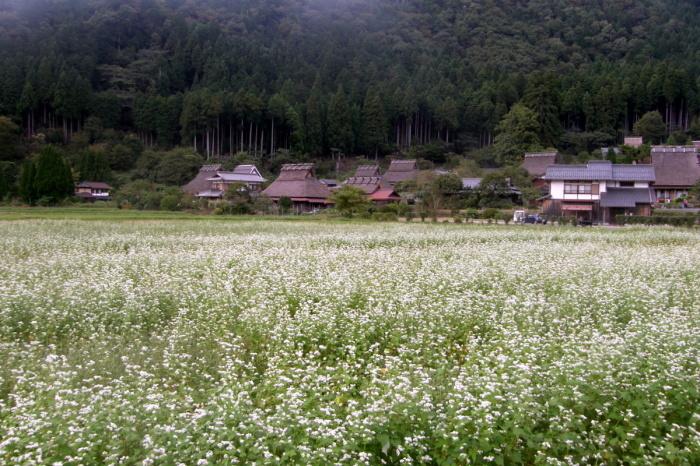 そば畑_c0057390_23002889.jpg