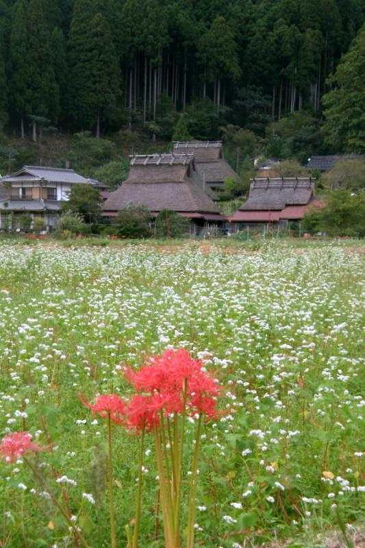 そば畑_c0057390_23003496.jpg