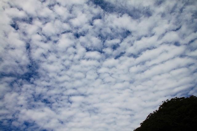 鎌倉の秋の花 鶴岡八幡宮 彼岸花_f0374092_21124330.jpg