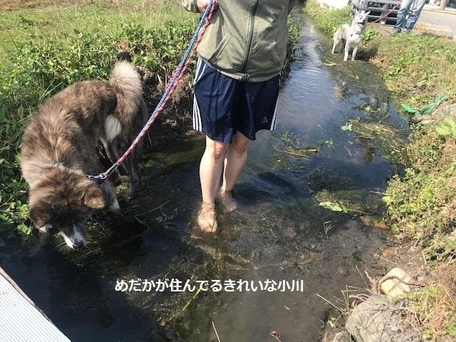 曼珠沙華まつりと川遊び♪_f0242002_10065256.jpg