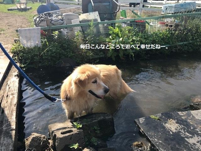 曼珠沙華まつりと川遊び♪_f0242002_10452211.jpg