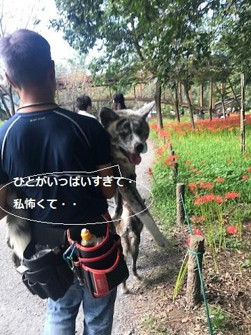 曼珠沙華まつりと川遊び♪_f0242002_11072118.jpg