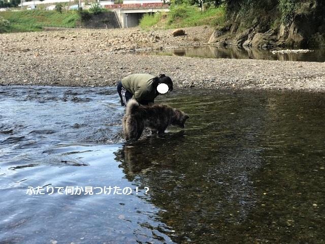 曼珠沙華まつりと川遊び♪_f0242002_11114323.jpg