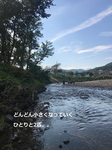 曼珠沙華まつりと川遊び♪_f0242002_11120217.jpg