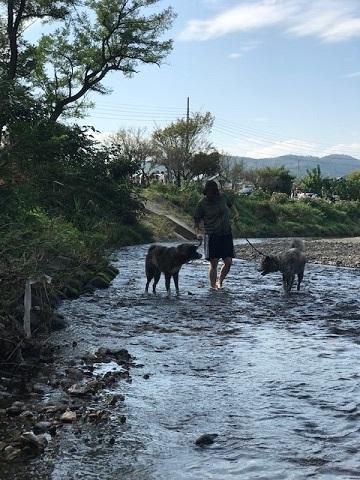曼珠沙華まつりと川遊び♪_f0242002_11320809.jpg