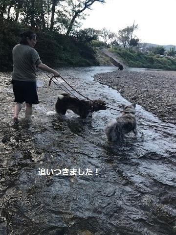 曼珠沙華まつりと川遊び♪_f0242002_11374012.jpg