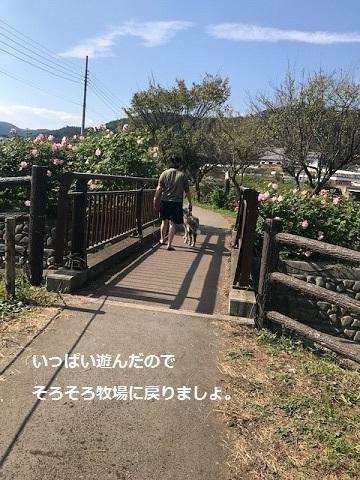 曼珠沙華まつりと川遊び♪_f0242002_11400845.jpg