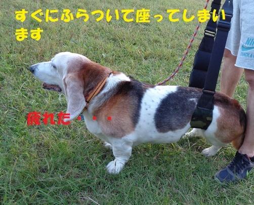 f0121712_00404443.jpg