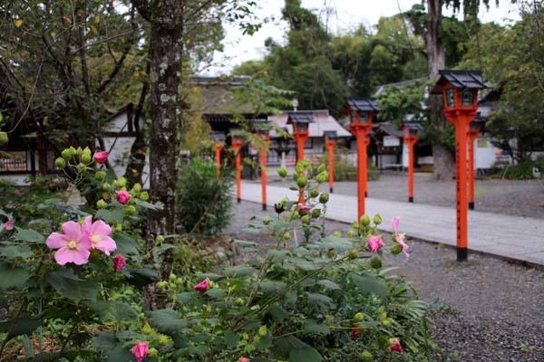 平野神社 ムラサキシキブなど_e0048413_20585253.jpg