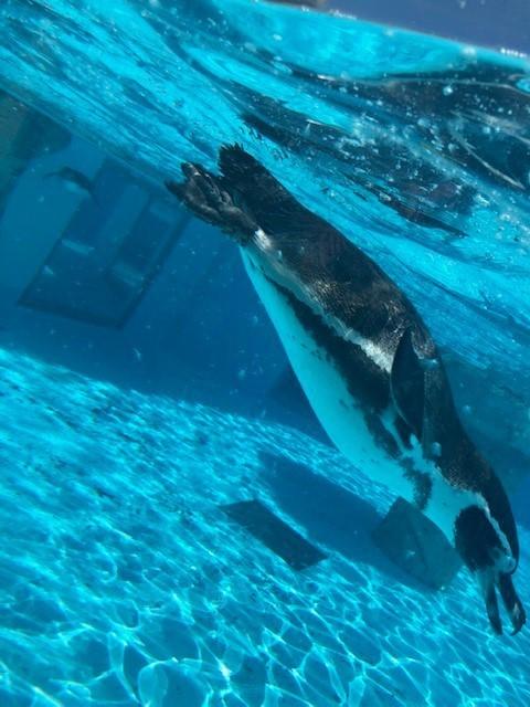 日本平動物園!_d0167225_10332575.jpg