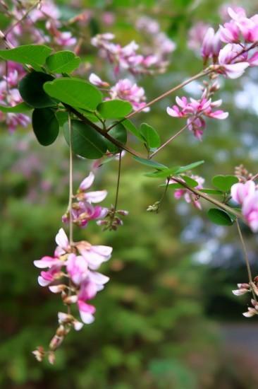 秋の花_d0336530_17373611.jpg