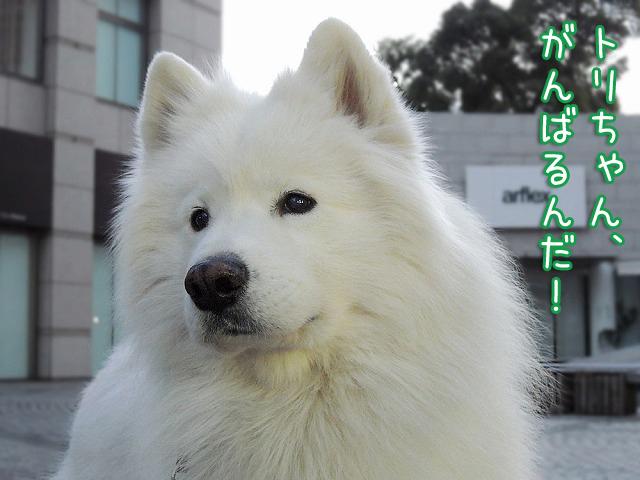 散歩屋日誌【16】【17】_c0062832_16172574.jpg