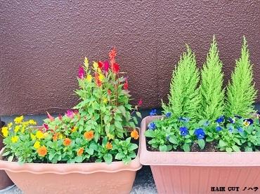 季節の花の苗_e0145332_13472280.jpg