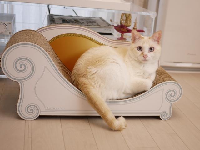 猫のお留守番 ニーナちゃん編。_a0143140_19425939.jpg