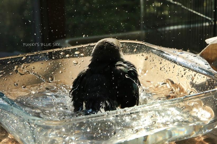 水浴びB.Bの記録 (9月30日・失敗編)_c0145250_14382216.jpg