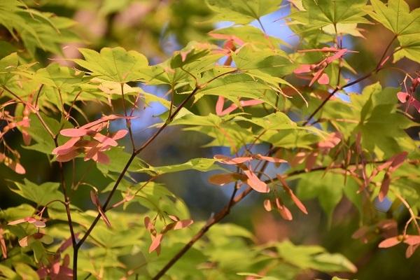 札幌市中島公園で秋を探してきました。_f0362073_11544587.jpg