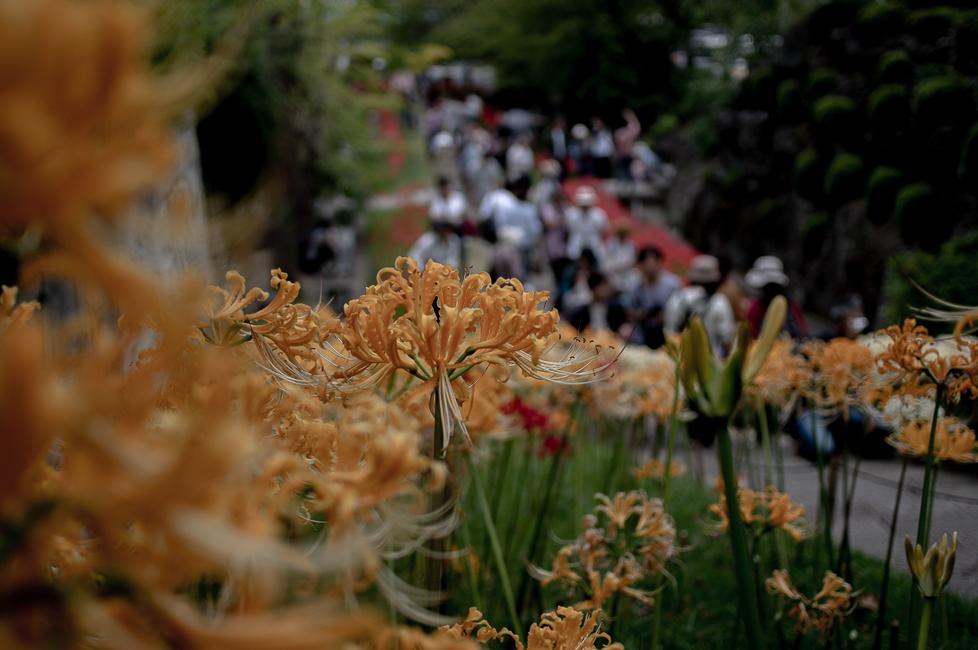 鮮やかな風景_b0297977_19474221.jpg