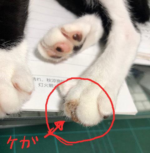 おかえり>あさりちゃん&花梨のお尻から??_d0071596_22315084.jpg