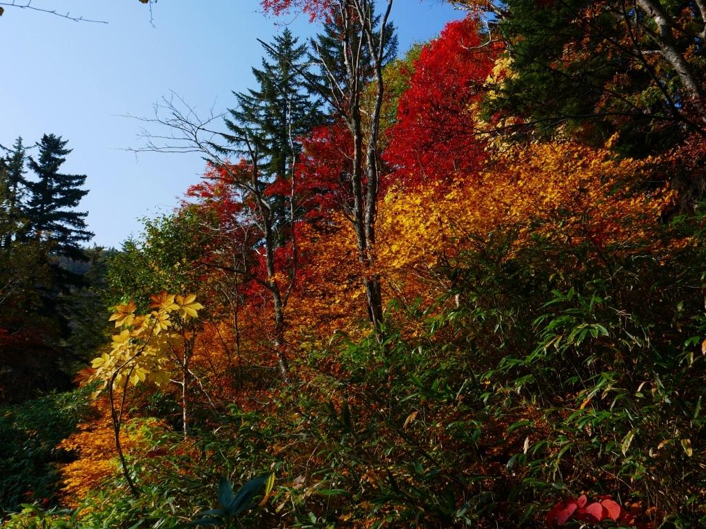 紅葉が見頃の無意根山、2019.10.2ー速報版ー_f0138096_17153613.jpg