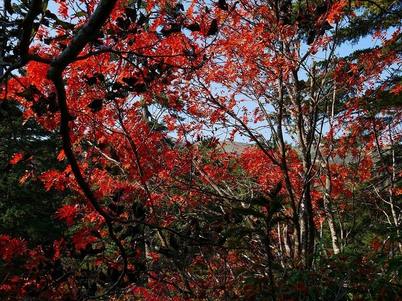 紅葉が見頃の無意根山、2019.10.2ー速報版ー_f0138096_17153779.jpg