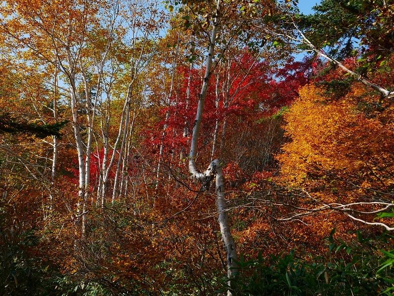 紅葉が見頃の無意根山、2019.10.2ー速報版ー_f0138096_17153854.jpg