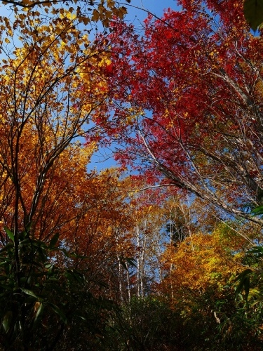 紅葉が見頃の無意根山、2019.10.2ー速報版ー_f0138096_17170161.jpg