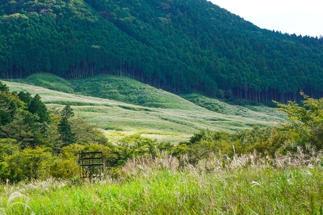 秋の箱根湿生花園_b0145398_23051025.jpg