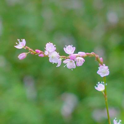 秋の箱根湿生花園_b0145398_23052732.jpg