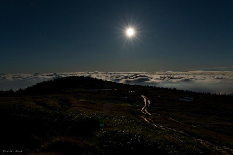 月夜の夢_f0321522_23053865.jpg