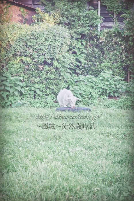 草叢の主。_f0235723_20062097.jpg