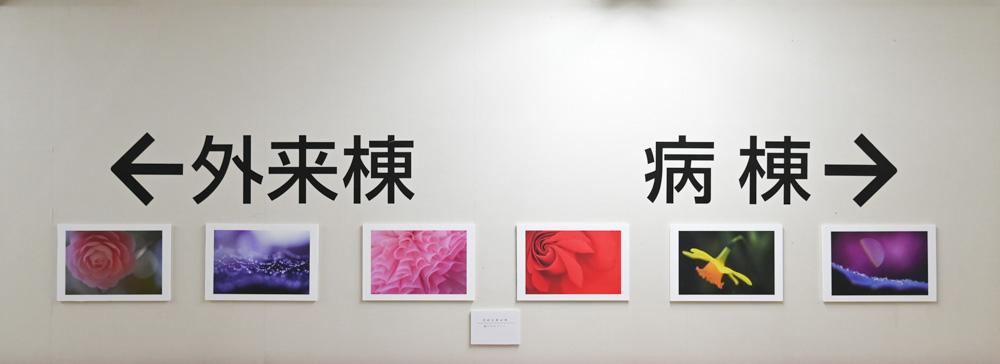 fotoroさんの花園_d0265224_23122293.jpg