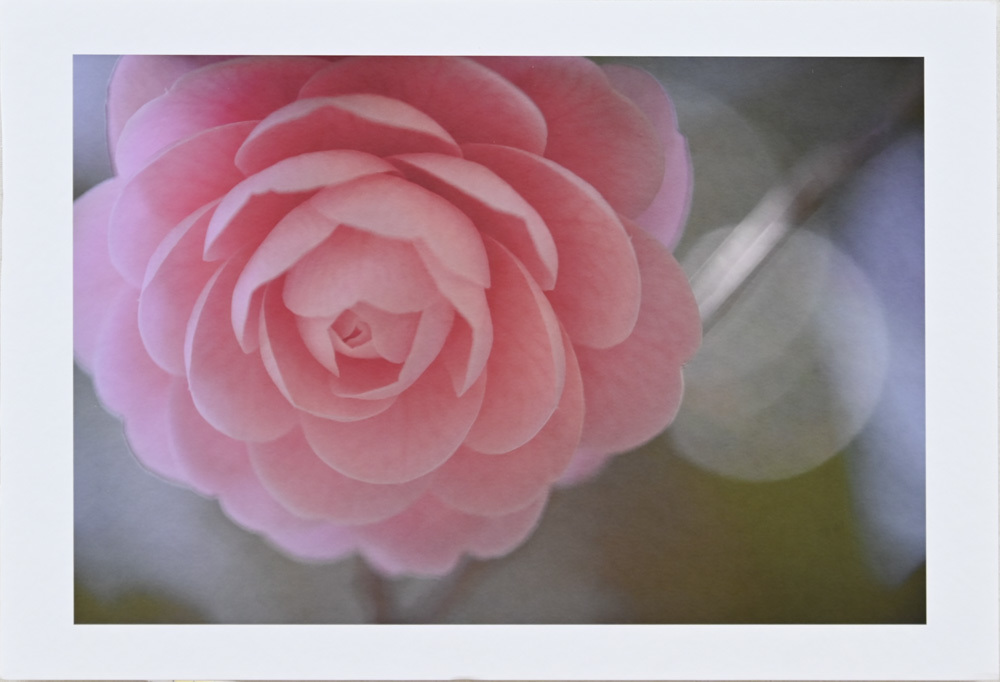 fotoroさんの花園_d0265224_23164654.jpg