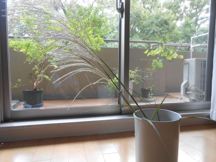 松茸(アメリカ産)や里芋でビール。_a0095931_18455241.jpg