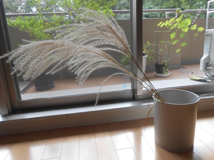 松茸(アメリカ産)や里芋でビール。_a0095931_18501778.jpg