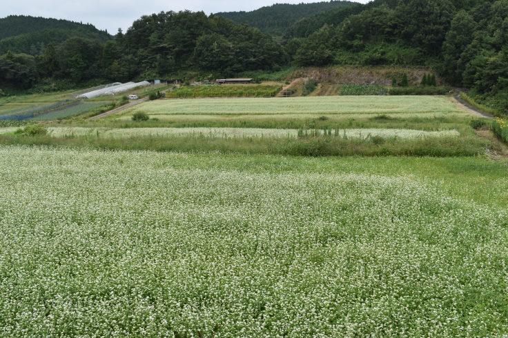 第22回京阪沿線眼科勉強会 その3 (1168)_f0088231_10325889.jpg