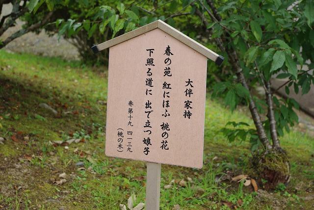 秋の福井の旅 万葉の里 味真野苑_d0043136_1974551.jpg