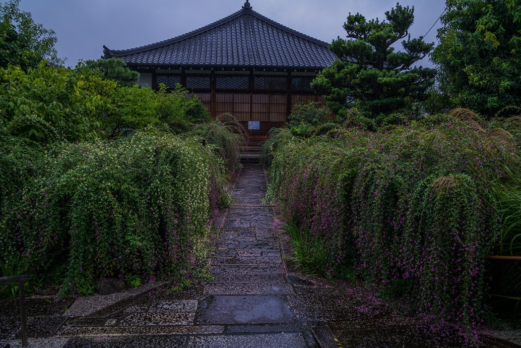 常林寺の萩_e0363038_18120377.jpg
