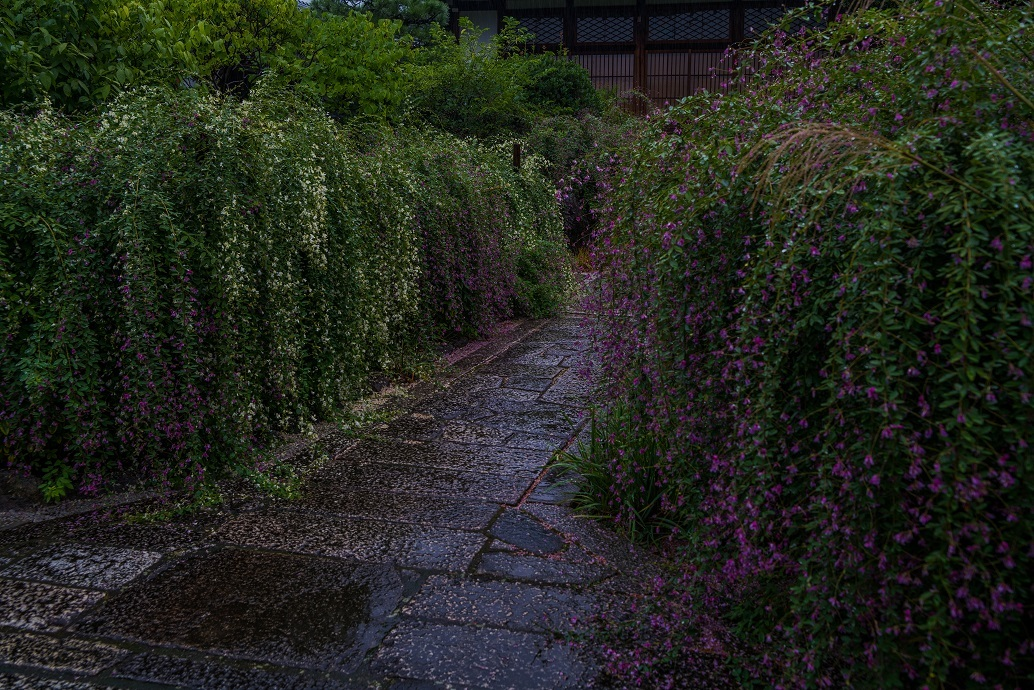 常林寺の萩_e0363038_18120805.jpg