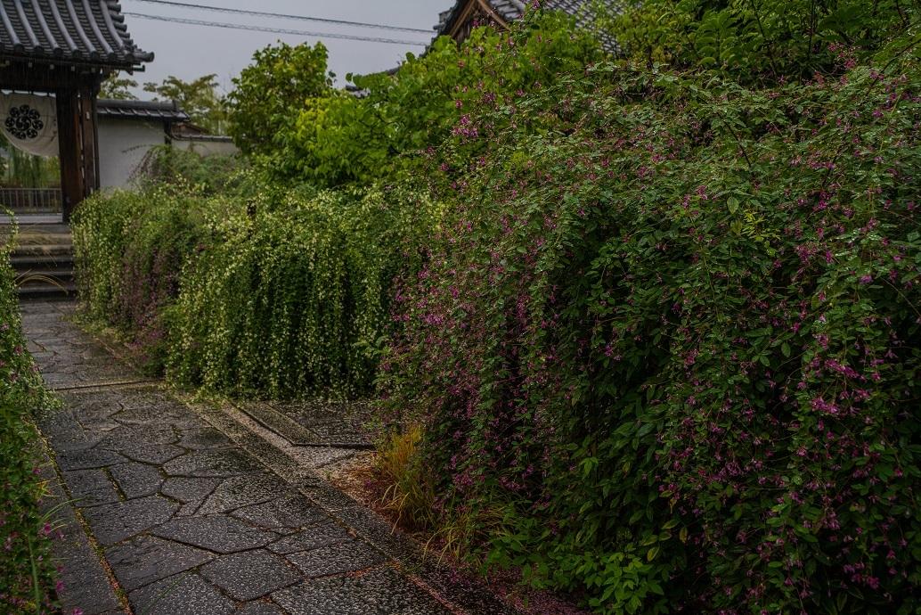 常林寺の萩_e0363038_18121889.jpg