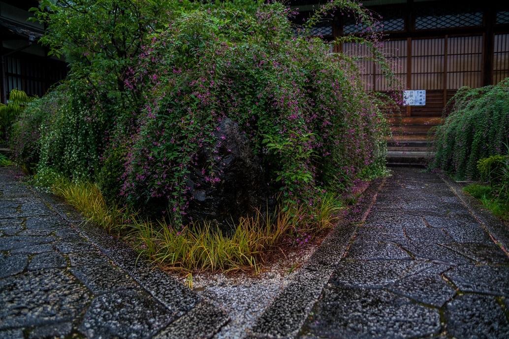 常林寺の萩_e0363038_18122351.jpg