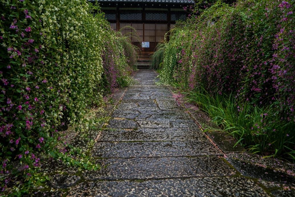 常林寺の萩_e0363038_18123375.jpg